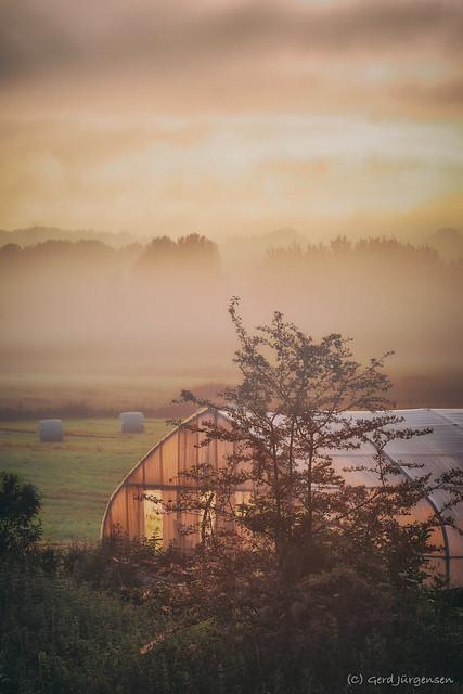 morning at Marlies farm