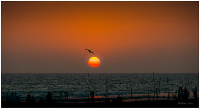 Sol rojo y vuelo de cometa // Red sun and kite flying