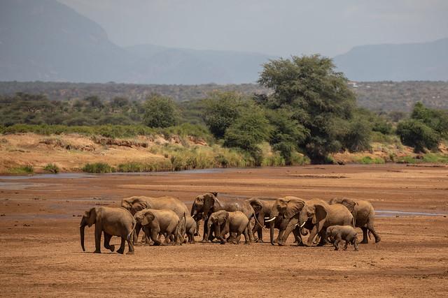 Crossing Ewaso Nyiro River