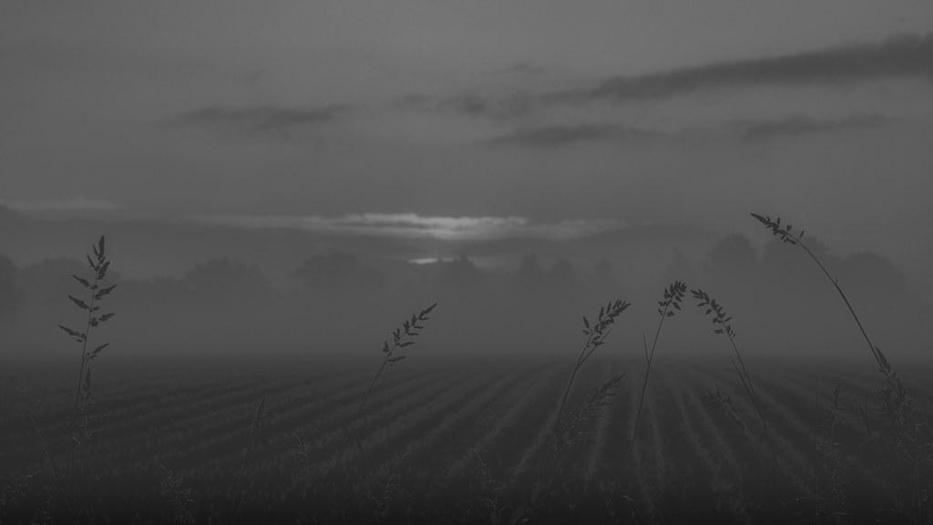 a fox. deer call their fawns. finally the sun is rising.