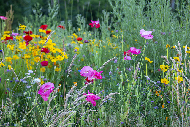 Wildflowers, Darts Hill