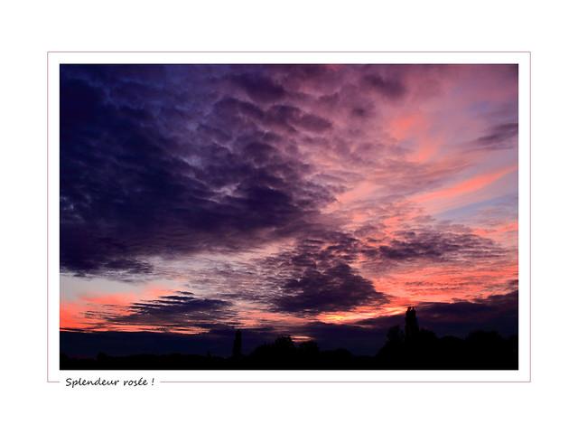 Dewy splendor ! / Splendeur rosée !