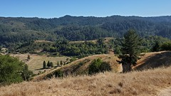This lovely Marin landscape...