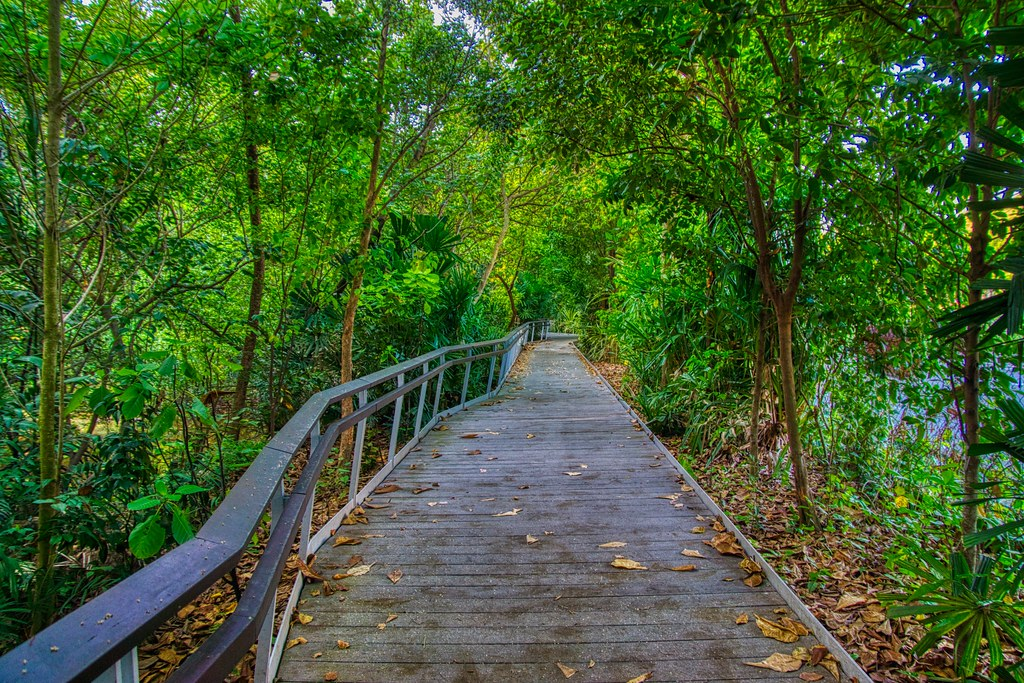 Berlayer Creek Boardwalk in Singapore