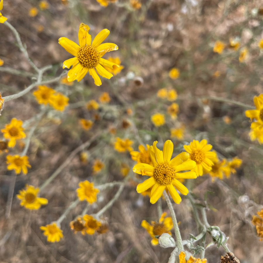 Susans-in-the-Spring-2021-14