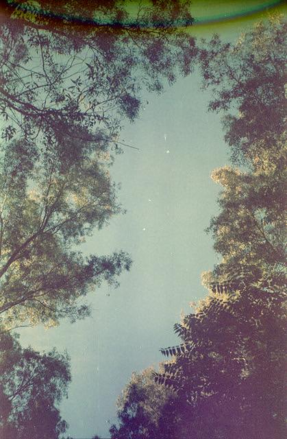 Polvere di stelle, stelle di polvere  (Stardust/Duststar)