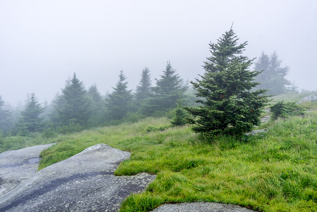 Rocks and conifers 2