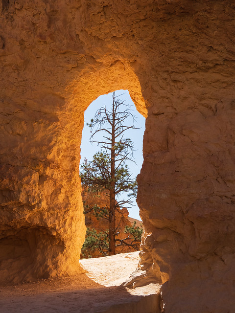 Limestone Doorway and Pine Tree