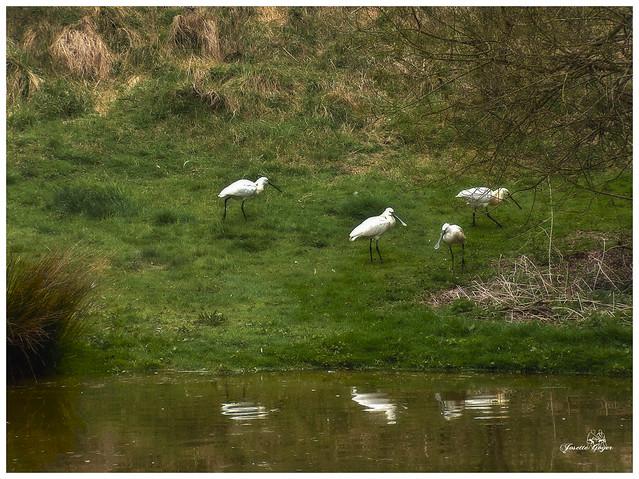 Olivet, sur les bords du Loiret...