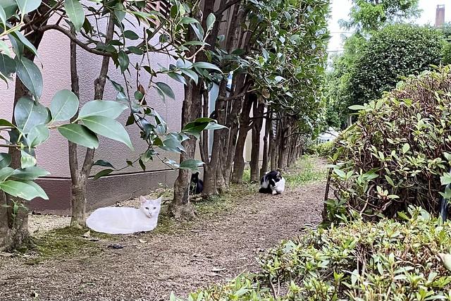 Today's Cat@2021−07−04
