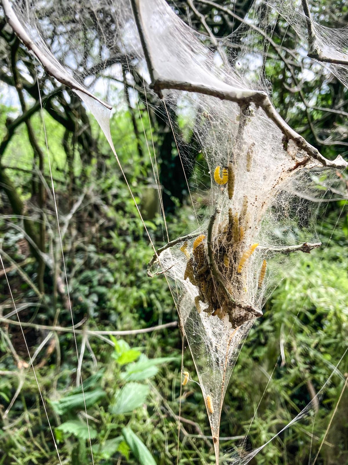 Caterpillar Tree