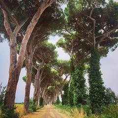 Toscana 2021