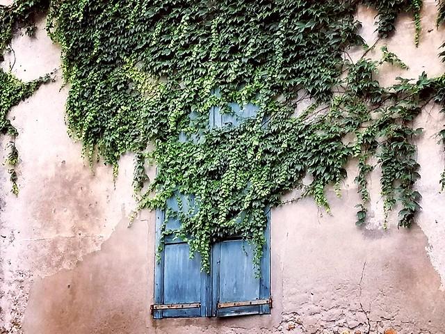 Fenêtre envahie par le lierre