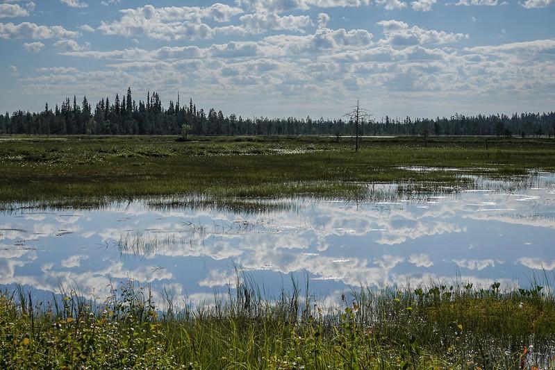 2021w26 Lapland swamp