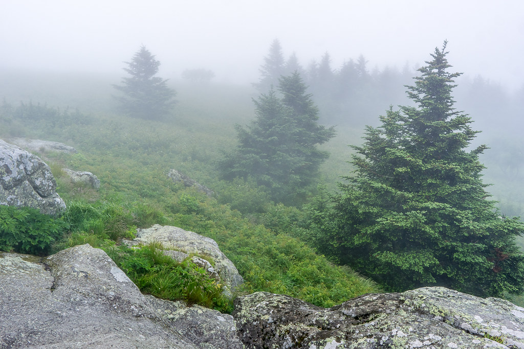 Rocks and conifers 1