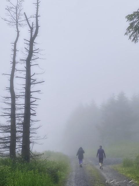 Damp Mist