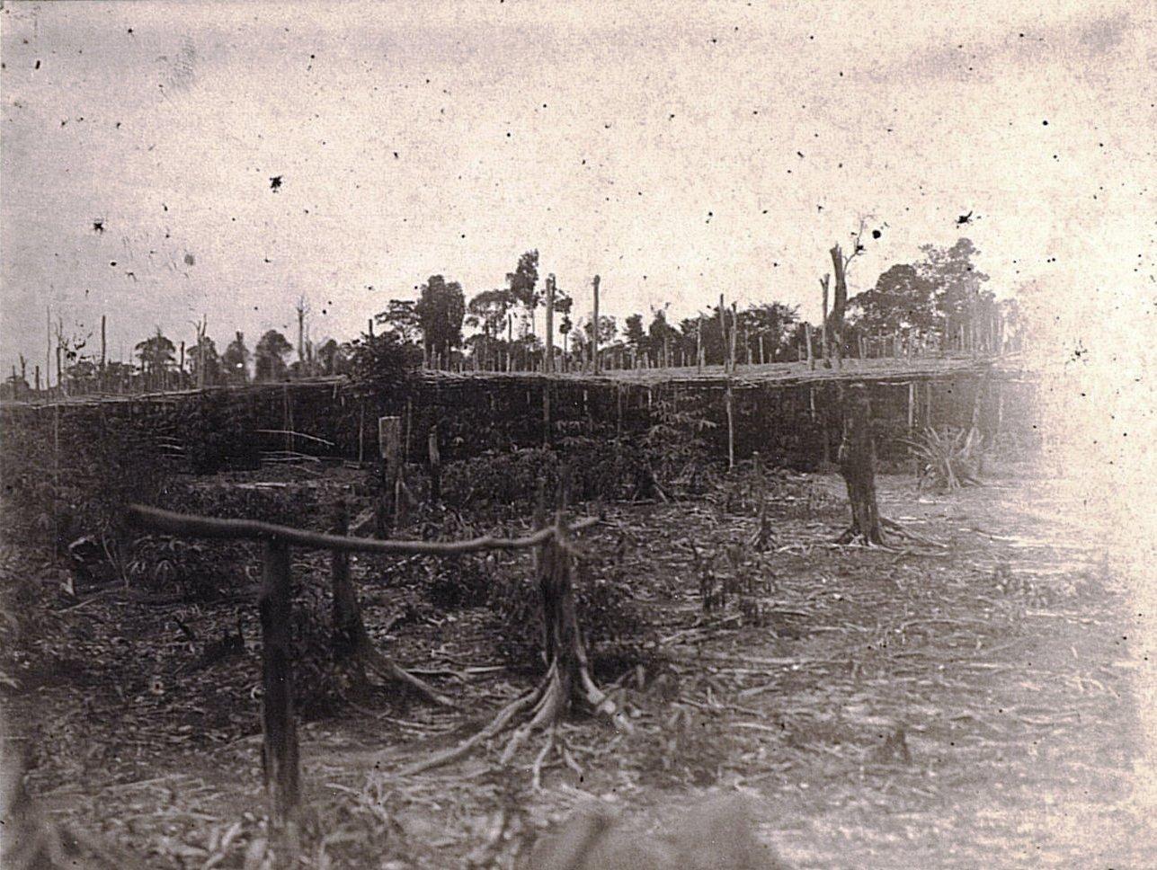 Плантация тапиоки. Суматра