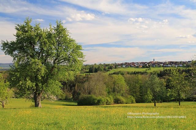 Hohengehren, Banholz in Spring