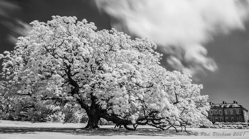 nationaltrust cornwall tree stunning blackandwhite mono longexposure