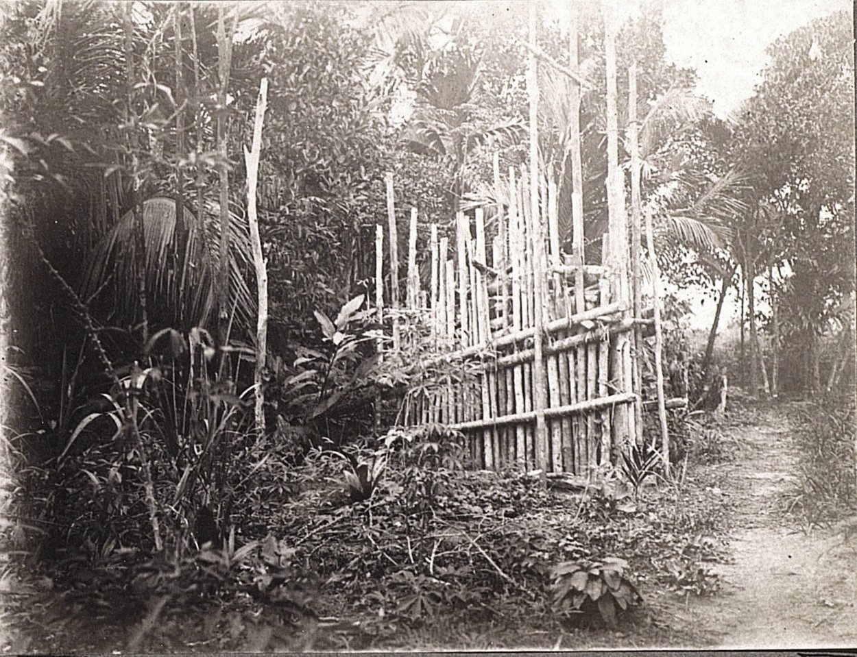 Ловушка для тигров. Суматра