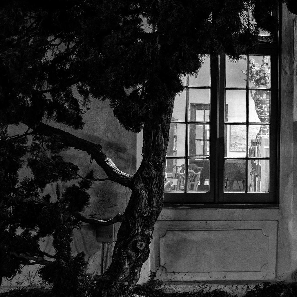 Through the Window: The Athenaeum Music & Arts Library in La Jolla: