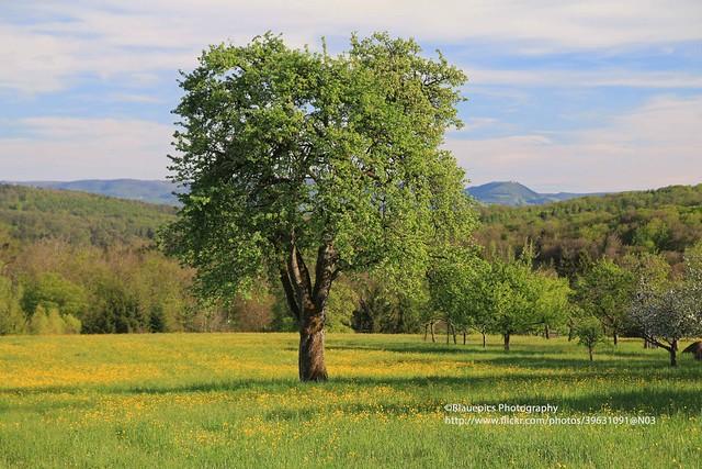 Hohengehren, Banholz, Spring