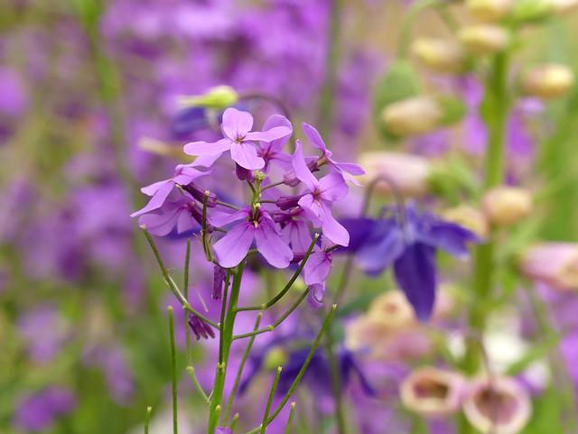Damask-violet
