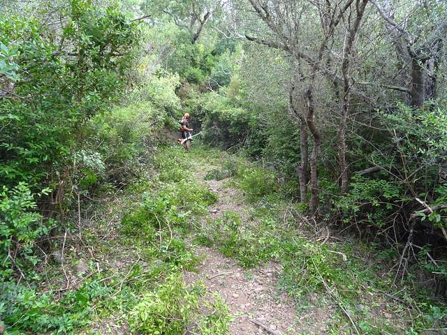 Sur le tronçon A Sarra - parc moto-cross : section maquisée en cours de travaux