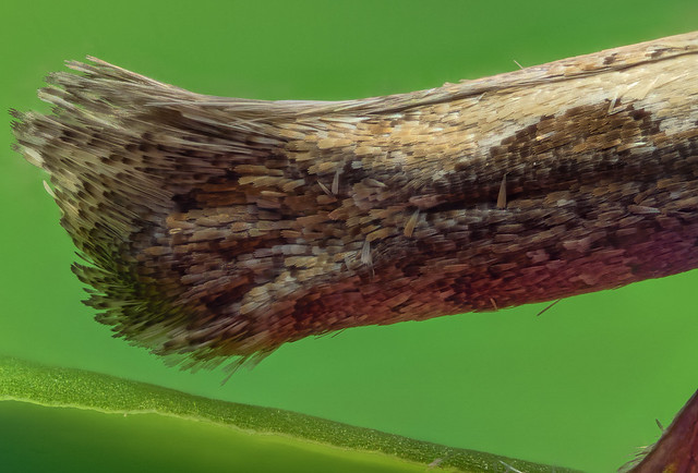 Flügel einer Motte