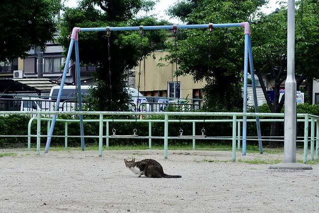 Today's Cat@2021−07−05