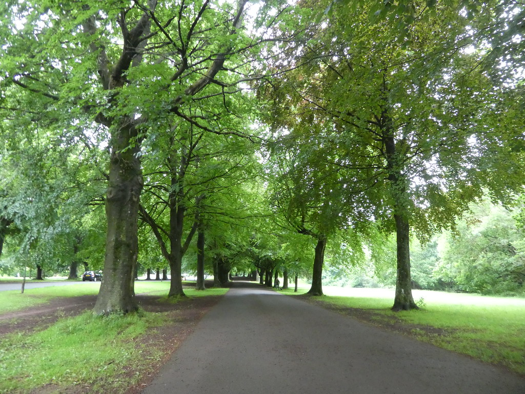 Avenue of Trees, Clifton Down, Bristol