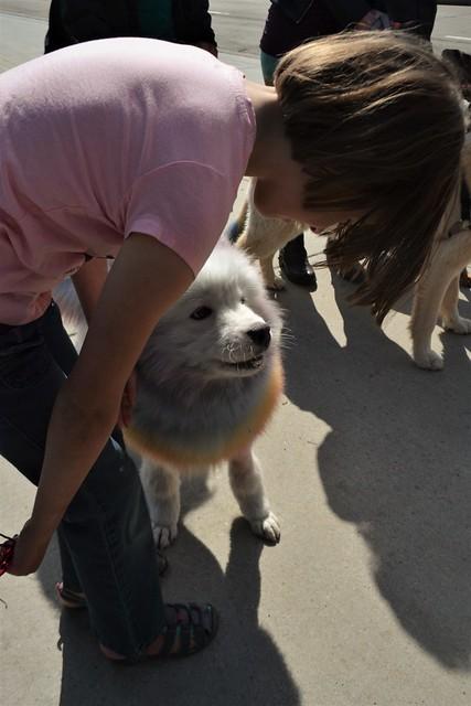 Rose Pets a Pupper