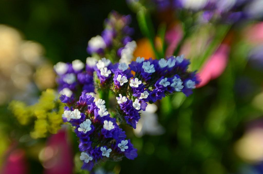 Flowers Macro - July 4, 2021