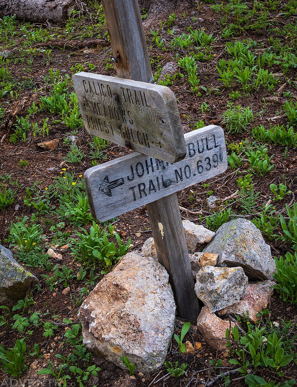 Calico Trail Junction Sign