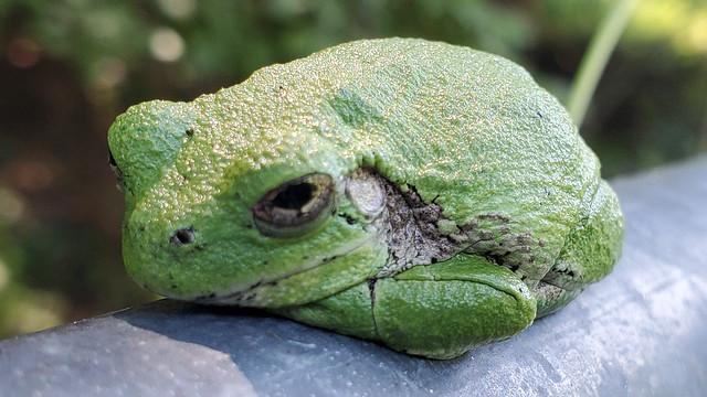 01_grumpy_frog