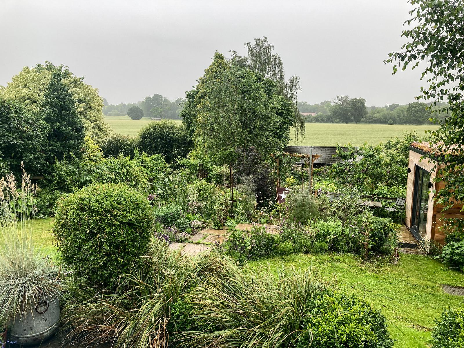 Wet June Garden Morning