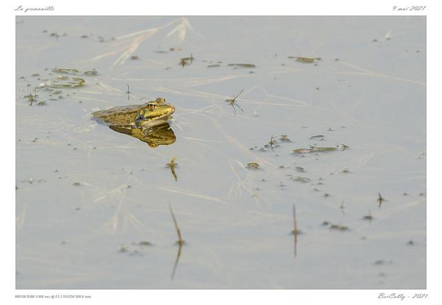 La grenouille   Frog