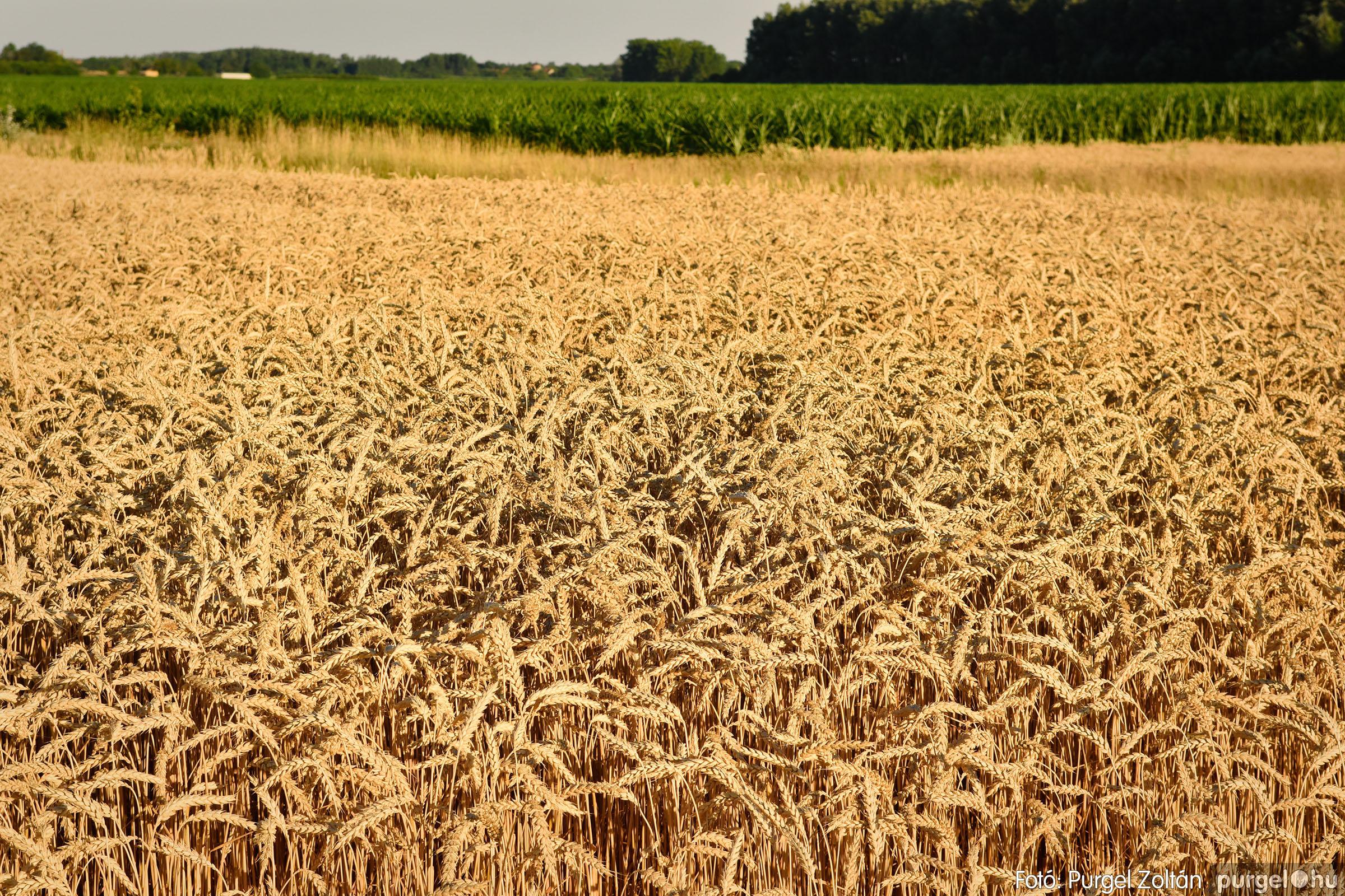 2021.07.06. 005 A fahíd és a Lándor környéke - Fotó:PURGEL ZOLTÁN© DSC_8006q.jpg