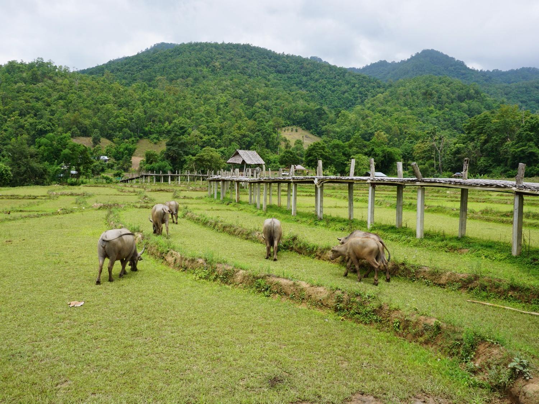 Pai bamboo bridge Thailand