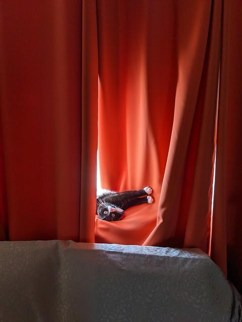 Nori, too hot in the window!