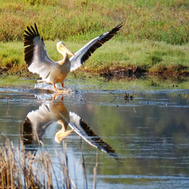 Landing at Pacheco Pond