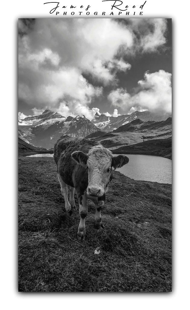 Carte postale made in Suisse...