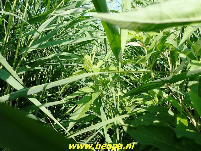 2021-07-02    Almere 3 daagse   van Heopa   2e dag (16)