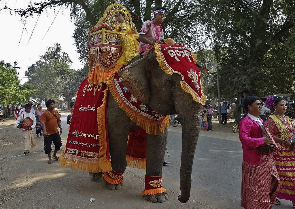 MYANMAR , Burma,  -  Prozession bei Bagan- Nyaung-U. ,Novize mit Elefant  bei der Shinbyu-Zeremonie , 78403/13823