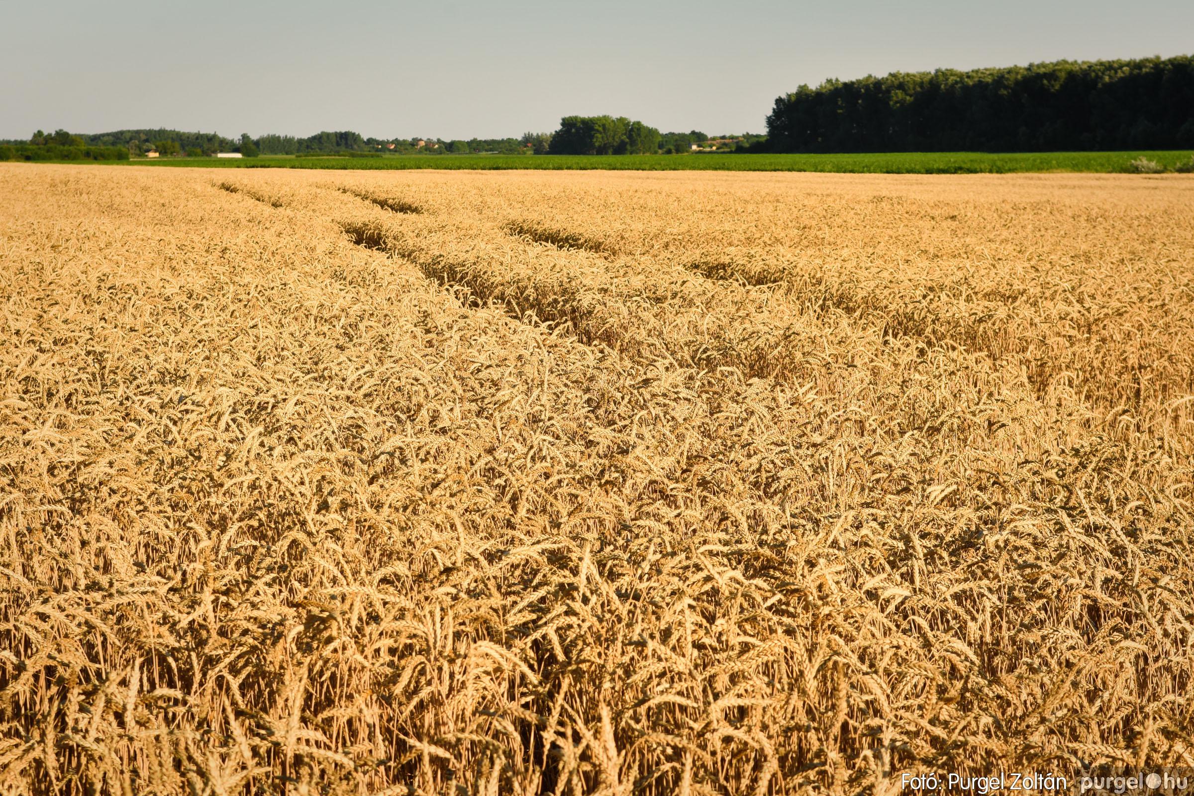 2021.07.06. 001 A fahíd és a Lándor környéke - Fotó:PURGEL ZOLTÁN© DSC_8000q.jpg
