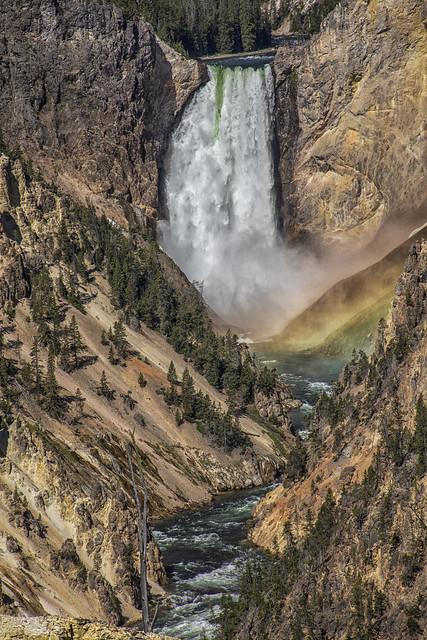 Yellowstone Falls 7I4A9914
