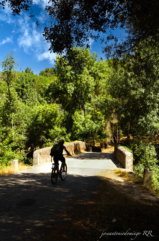Puente y ciclista