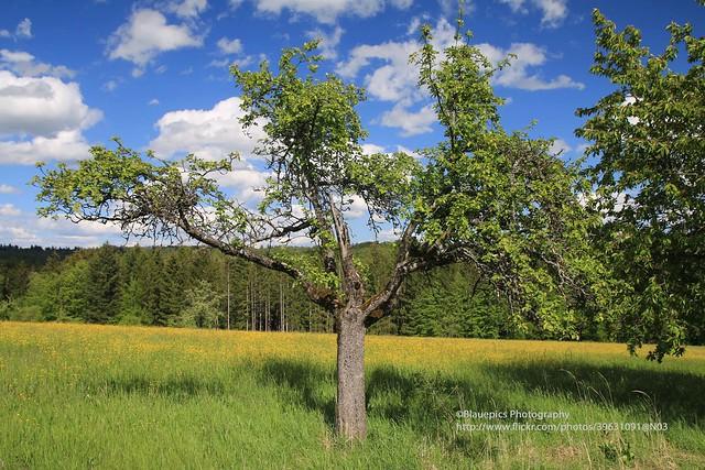 Hohengehren, Banholz, colours of Spring
