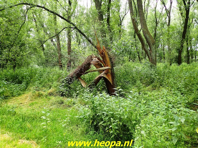 2021-07-02    Almere 3 daagse   van Heopa   2e dag (21)