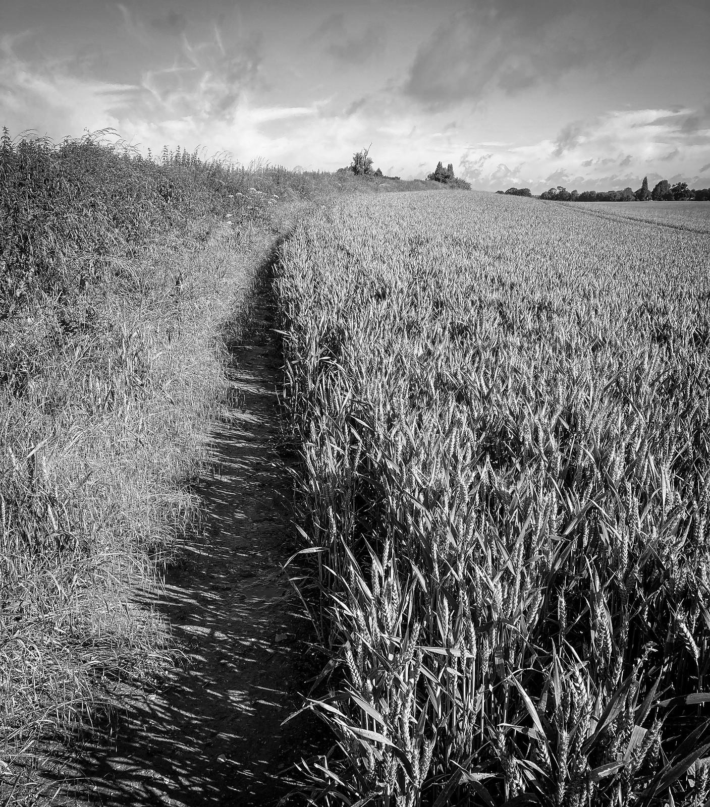 Path home